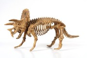DINOSAURUS Big Skeleton - Triceratops